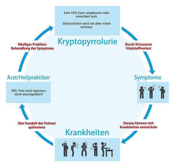 Kryptopyrrolurie Kreislauf