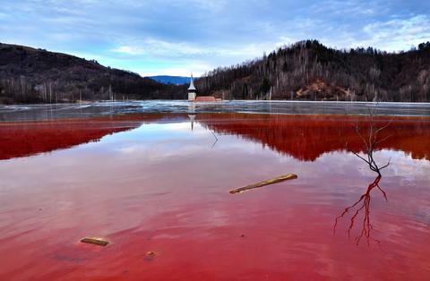 quecksilbervergiftung ausleitung mit algen