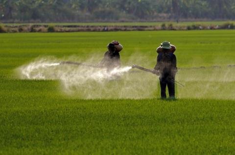 Pestizide im Essen