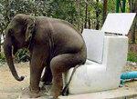 elefantenklo.jpg