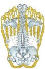Beide-Fußsohle-Übertragung-auf-Skelett.jpg