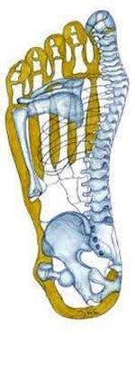Linker-Fuß-Sohle-Übertragung-auf-Skelett.jpg