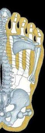 Rechter-Fuß-Sohle-Übertragung-auf-Skelett.jpg
